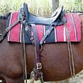 Florida Cracker Saddle by D Hackett