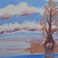 Florida Cypress by Warren Thompson