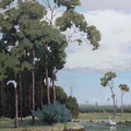 Florida Cypress With Birds by Hope Reis