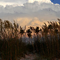 Florida Dunes by David Lee Thompson