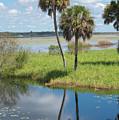 Florida Essence - The Myakka River by Susan Molnar