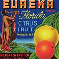 Florida Eureka Citrus Fruit Crate Label by Daniel Hagerman