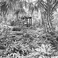 Florida Garden Scene_009 by Pat Canova