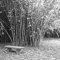 Florida Garden Scene_010 by Pat Canova
