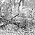 Florida Garden Scene_012 by Pat Canova