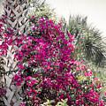 Florida Garden by Todd Blanchard