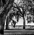 Florida Interior From Bok Gardens by Susan Molnar