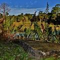 Florida Lands 6 by Lisa Renee Ludlum