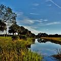 Florida Lands 7 by Lisa Renee Ludlum