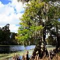 Florida Landscape - Lettuce Lake by Carol Groenen