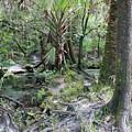 Florida Landscape - Lithia Springs by Carol Groenen