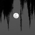Florida Moon by Peg Urban