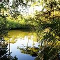 Florida Of Olde by Florene Welebny