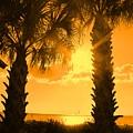 Florida Orange by Ian  MacDonald