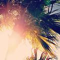 Florida Palm by Shawn Smith