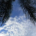 Florida Palm Fronds Blowing In The Breeze by Belinda Lee