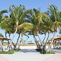 Florida Palms At Beach by Rebecca Pavelka