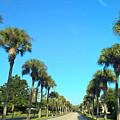 Florida Palms by Janet Deskins