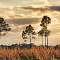 Florida Pine Landscape By H H Photography Of Florida by HH Photography of Florida