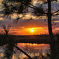 Florida Pine Sunset by HH Photography of Florida