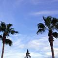 Florida Queen Palm   by Allan  Hughes