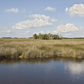 Florida Salt Marsh by John Arnaldi
