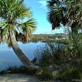 Florida Shade Trees by Wayne Denmark