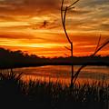 Florida Sunset  by Allen Williamson