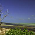 Florida Tree by Mary Koutzarov
