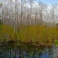 Florida Wilderness by David Lee Thompson