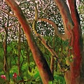 Florida Woodlands by Cindy Harvell