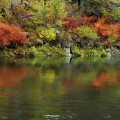 Flow Of Autumn by Donna Blackhall