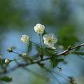 Flower # 056 by Igor Smirnoff