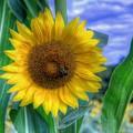 Flower # 37 by Albert Fadel