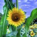 Flower # 38 by Albert Fadel