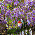 Flower - Wisteria - A House Of My Own by Mike Savad