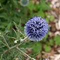 Flower 1 by Ben Upham III