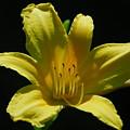 Flower 1 by Steven Crown