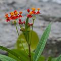 Flower 13 by Pamela Williams