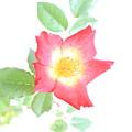 Flower 17 by Avi Hirschfield