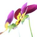 Flower 18 by Avi Hirschfield