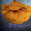 Flower #2030 by Hans Janssen
