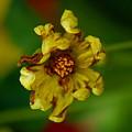 Flower 3 by Ben Upham III
