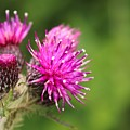 Flower 3 by Lisa Spero