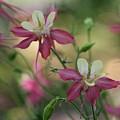 Flower 3506_2 by Steven Ward