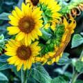 Flower #39 by Albert Fadel