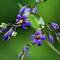 Flower 4 by Ben Upham III