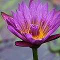 Flower 5 by Lisa Spero