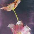 Flower-5 by Okan YILMAZ