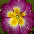 Flower 7 by Ben Upham III